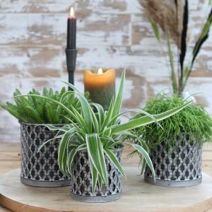 Testos de disseny per a plantes